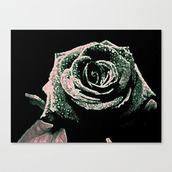 Sparkling Rose Canvas Print by Ash Rose