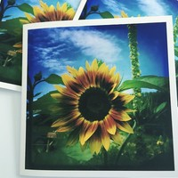 Summer Beauty - Sunflower Set of Three Art Greeting Cards by OneDayOneImage Fine Art Cards