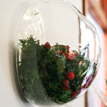 Glass Vase, Wall Dome