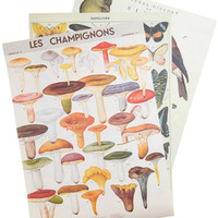 Remains to be Scene Paper Set in Pasture by ModCloth