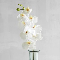 White Faux Phalaenopsis Orchid Stem