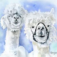 Alpacas Watercolor Painting Giclee Print Reproduction 8 x 10