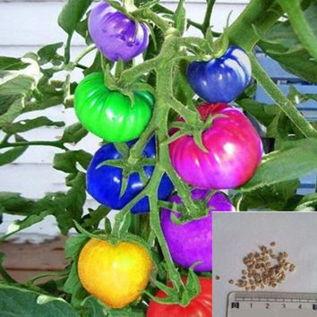 100Pcs Fruit Seeds Rainbow Tomato Kiwi Blueberry Bonsai Colorful Rare Vegetables Seed Good Quality