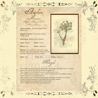 MAGICK HERB ANGELICA, Digital Download,  Book of Shadows Page, Grimoire, Scrapbook, Spells, White Magick, Wicca, Witchcraft, Herb Magic