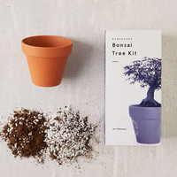 Miniature Indoor Bonsai Tree | Urban Outfitters