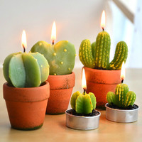 """""""THE CACTUS FAMILY"""" BIG CANDLE"""