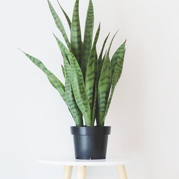 "Fake Indoor/Outdoor Sansevieria Snake Plant in Pot - 24"" Tall"