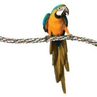 Petmate Booda Comfy Bird Perch Size: Large 21""