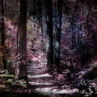 Nature Photography, Enchanted Photography, Woodland, Enchanted Forest Trail, Fine Art Print, Photography, Art, Nature, Home Decor,Michigan