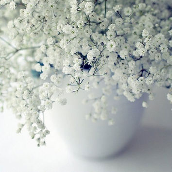 Babys Breath Flower Seeds (Gypsophila Elegans) 200+Seeds Zones 3-10