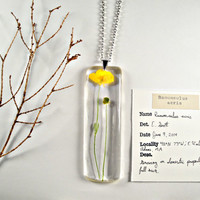 Meadow Buttercup (Ranunculus acris) - Botany Necklace, Preserved Specimen Biology Jewelry