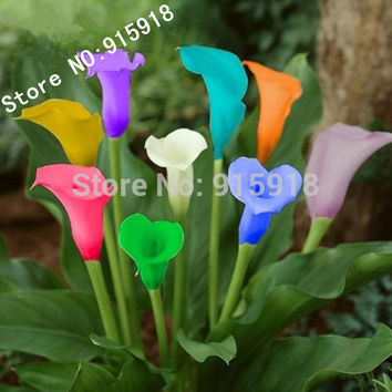 Flower seeds 100 PC bonsai colorful calla lily seed, rare plants flowers Home gardening DIY