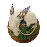 Taxidermy Mouse - Sleeping Mouse - Weird Taxidermy - Real Taxidermy - Curiosities and Oddities - Fairy Mouse - Fairy Wings