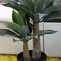 """Coco's Plantation 30"""" Agave Plant in Pot"""