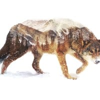 Wolf In The Arctic
