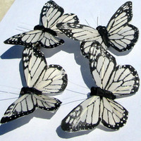 Butterfly Hair clips Monarch white with black feather butterfly hand made hair clip by Ziporgiabella  sold individually