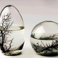 EcoSphere Closed Aquatic Ecosystem, Small Sphere