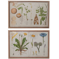 Pair of Danish Botanical Prints