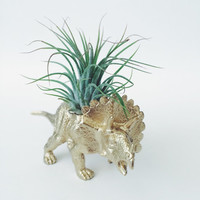 Gold Triceratops Dinosaur Planter + Air Plant; Dinosaur Planter; Desk Accessory; Dorm; Home Decor; Gift; Office Decor; Desk Plant