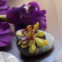 engraved beach stone  planter for flowers  miniature by Mihulli