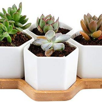Anomasu White Ceramic Hexagon Succulent Cactus Succulent Plant Pot with Free Bamboo Tray for Home Decoration 1 Pack of 4