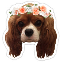 King Charles Cavalier with flower crown by lsmoskow