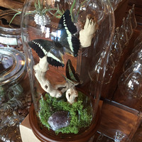 Glass Dome Terrarium with Mounted Butterflies