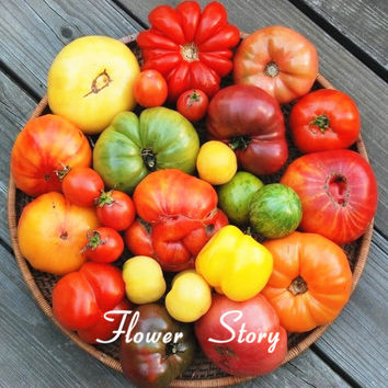 200 Mixed Tomato Seeds, Organic Heirloom ,hardy ,heat resistant , rich flavor flower seeds, free shipping