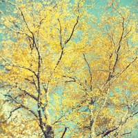 Fall Photography, Autumn, Yellow Leaves, Blue Sky, Pastel, Nature - The Language of Trees