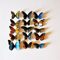 Butterfly Magnets Set of 15 Insects by Doug Walpus