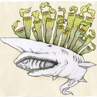 Goblin Shark with Pitcher plant