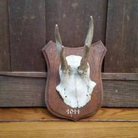 Vintage Wood Shield Antler Mount Roe Natural Horn Taxidermy