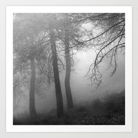 """""""Dream forest BW"""". Living in a dream... by Guido Montañés"""