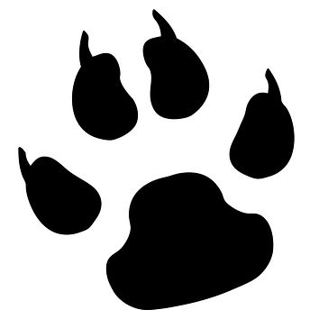 Black Paw Print Waterproof Temporary Tattoos Lasts 3 to 4 days Choose Small, Medium or Large Sizes