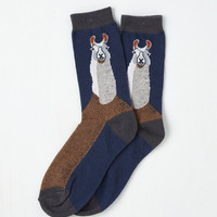 Critters Word to Your Llama Socks Size OS by ModCloth