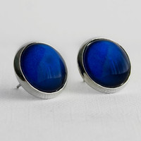Royal Blue Post Earrings in Silver - Navy Blue Studs