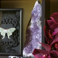 Ethically Sourced Dwarf Luna Moth Shadow Frame Display by The Butterfly Babe