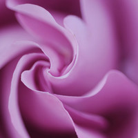 READY TO SHIP, Flower Photography, Floral Photography, Instant Collection, 4 x 6 Photographs, Your choice of 5 images
