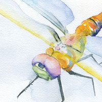 Dragonfly Watercolor Painting Giclee Print
