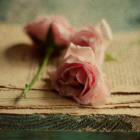 Roses, tattered pages, pink, romantic, cottage style, french country, flower wall art, botanical, vintage, beige, cream, fine art photo,8x10