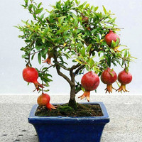 50 Bonsai Pomegranate Seeds Sweet Delicious Fruit Tree Excellent Houseplants Plants Home Gardening Flower Pots Balcony Decor DIY