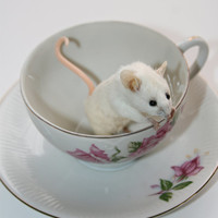 Studio Sisu Original Taxidermy Mouse in a Vintage Mis-Matched Teacup & Saucer, Tea Lover, Tea Party, Housewarming Gift, Mother's Day Present