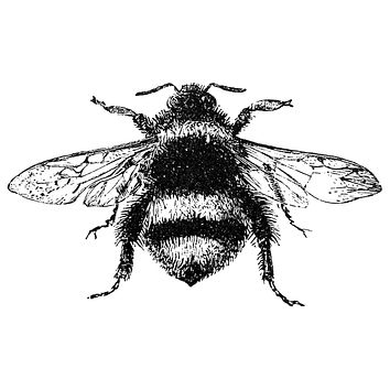 Bumblebee Waterproof Temporary Tattoos Lasts 3 to 4 days Choose Small, Medium or Large Sizes