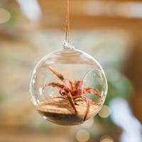 Hanging Terrarium Medium