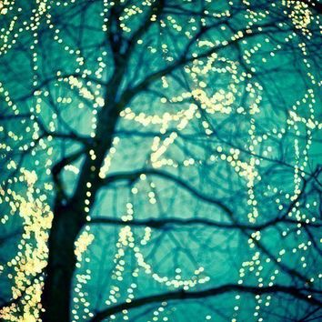 Tree Lights, Winter Photograph, Color Photography, Bare Branches, Fine Art Print, Blue Wall Decor, Christmas - Twinkle
