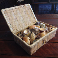 Sea Shell Treasure Box