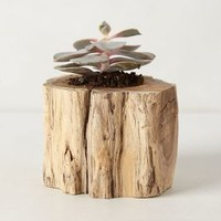 Tree Trunk Planter by Anthropologie in Neutral Size: One Size House & Home
