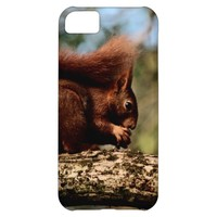 Cute Red Squirrel Eating Food iPhone 5C Case