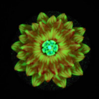 Red Orange and Yellow 3D Flower Pendant EyeGloArts Glow in the Dark Millefiore Jewelry #F1Dec2014
