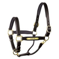 Perri's Soft Padded Leather Halter with Engraved Plate